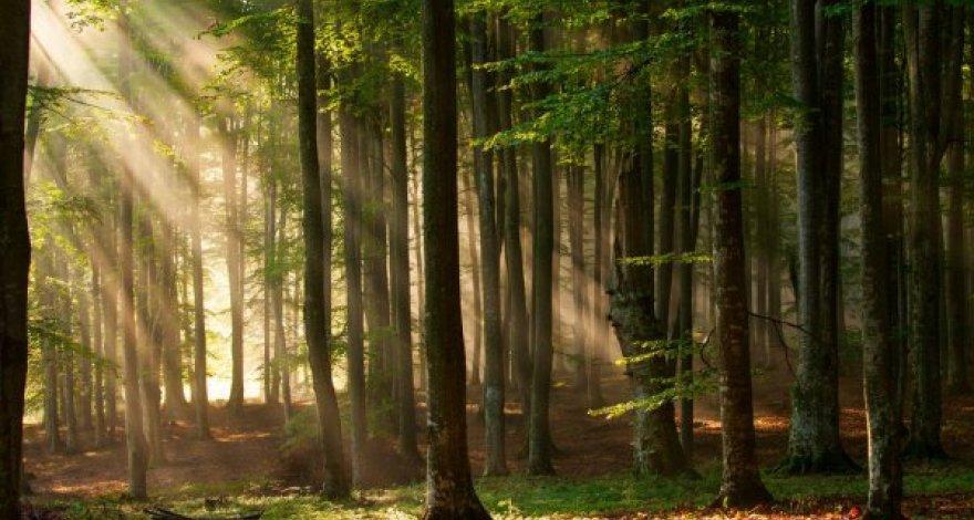Названы районы, на территории которых больше всего вырубаются леса