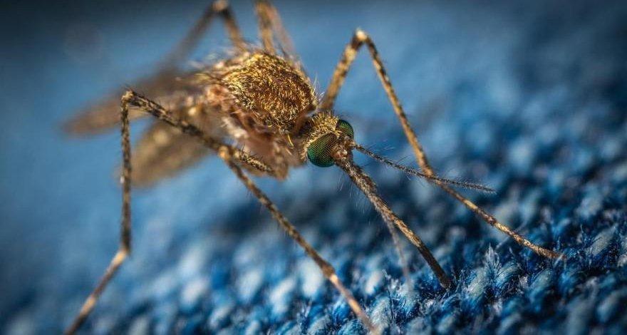 Ученые заявили о смертельной опасности укусов комаров