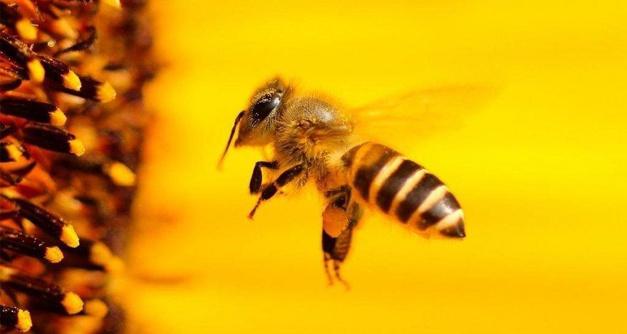 В Агстафе умер мужчина, которого ужалила пчела