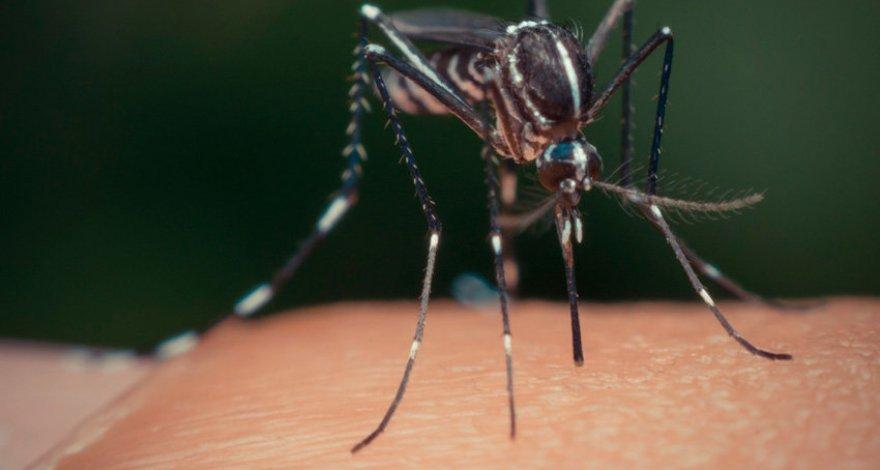 В Турции появился особо опасный вид комаров