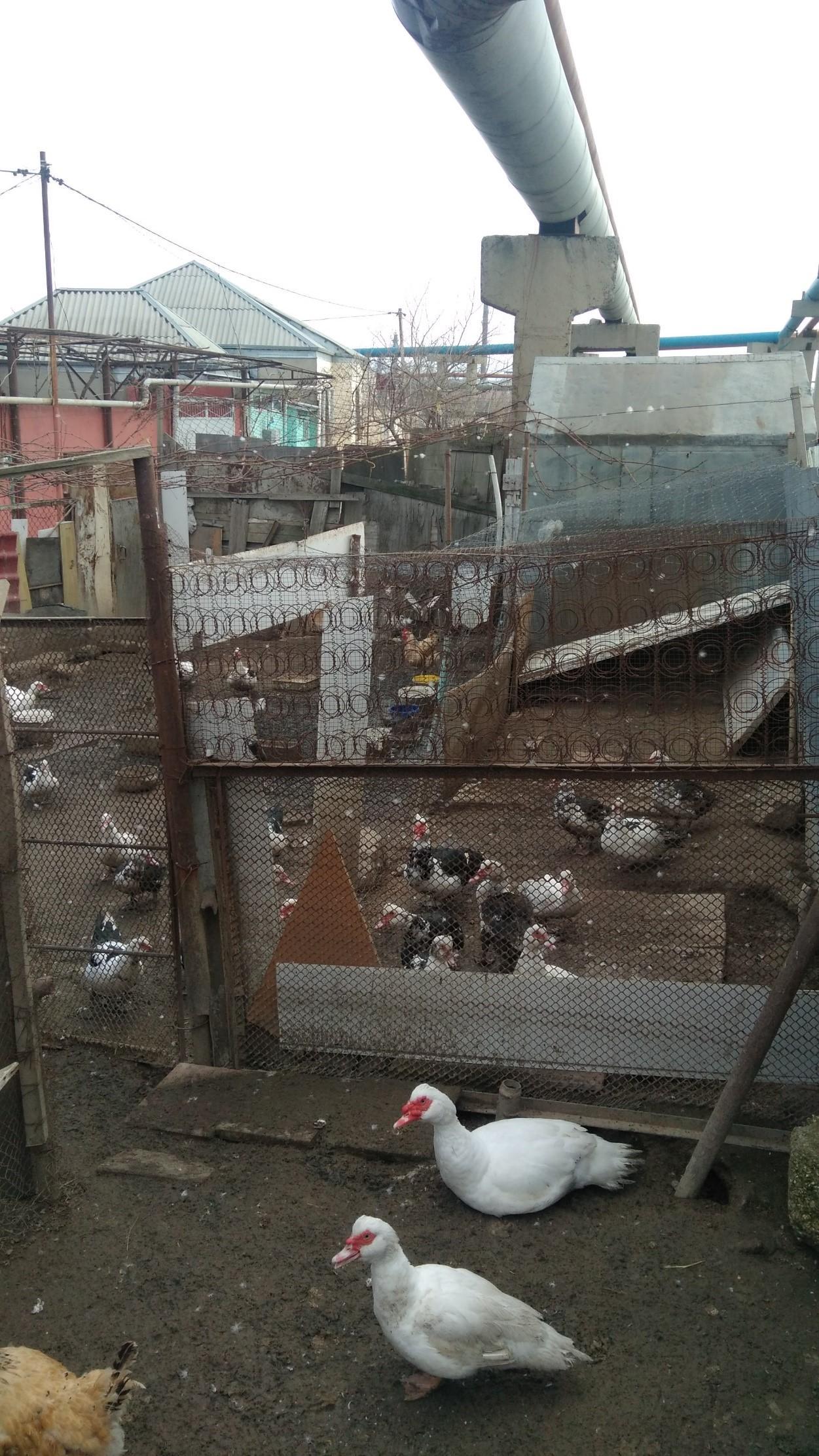 v xatainskom rajone mozhet proizojti tragediya poxuzhe chem v